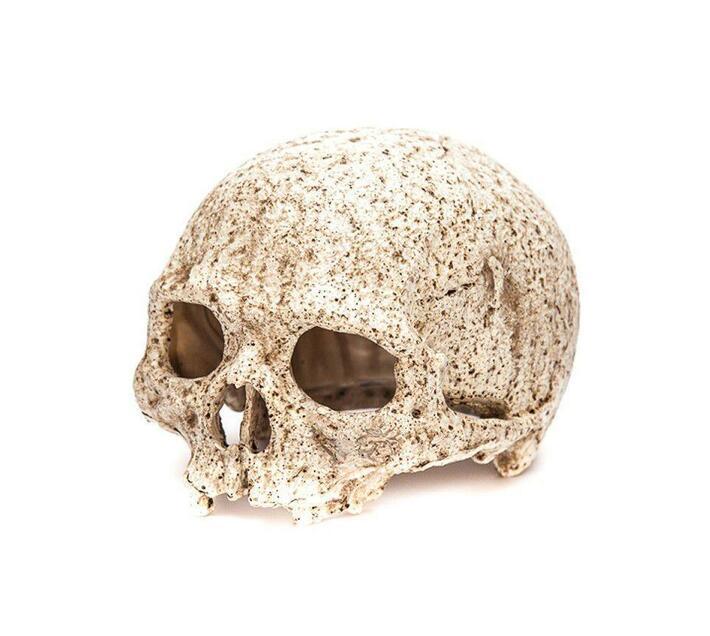 Primate Skull for Terrarium