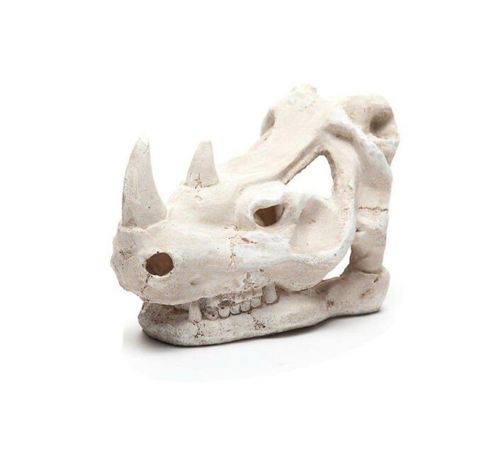 Dinosaur Skull for Terrarium