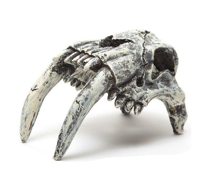 Predator Skull for Terrarium