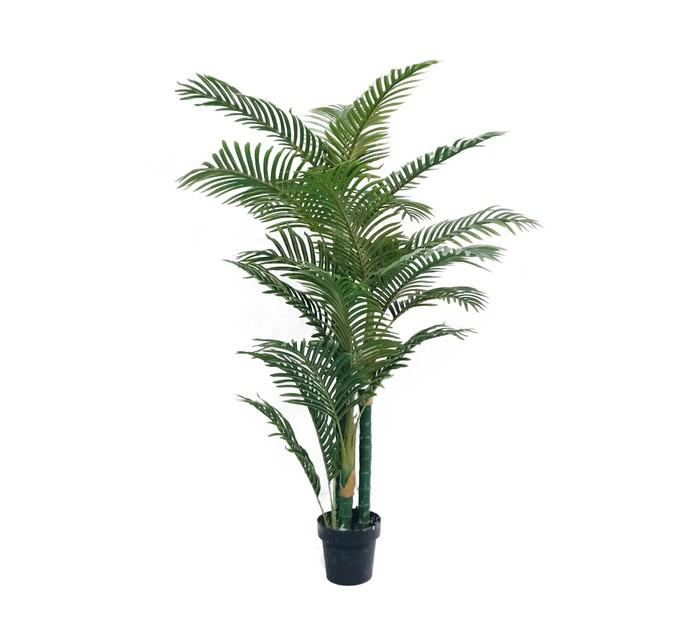 Havana Palm Tree